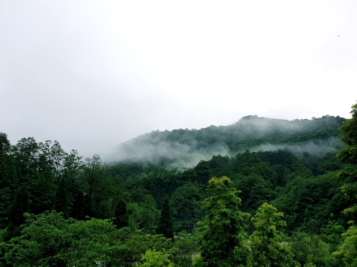 a lush green mountain with clouds resting at the peak