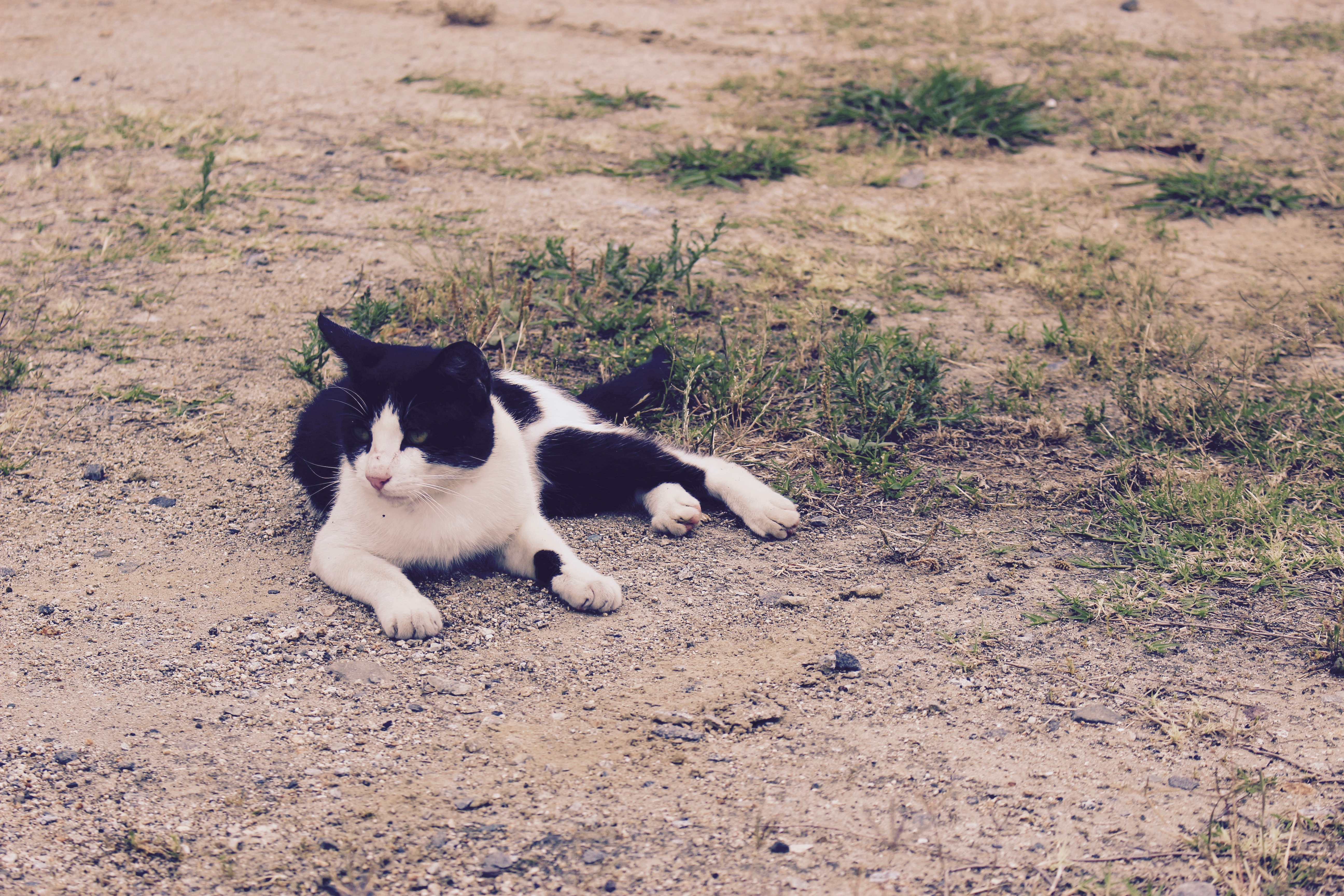 Black and White Cat, Chilling